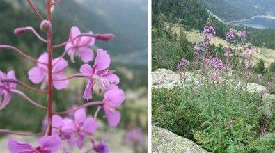 Plantes Graines Hiver Jardin Oiseaux Exotiques Semences Fleur