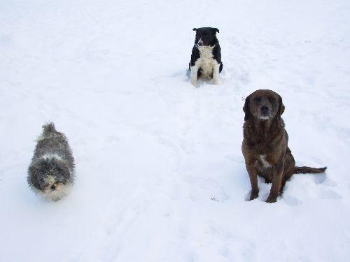 Nos chiens ...
