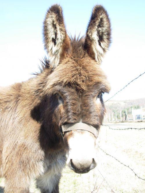 un âne ... ( celui de notre voisin...)