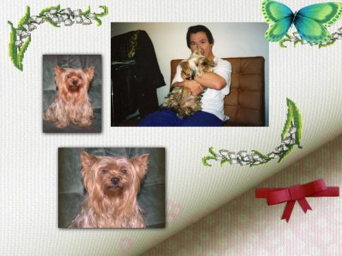 collage_2013-12-31_11-12-10.p.jpg