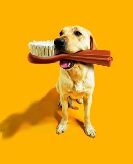 Pedigree DentaStix pour nettoyer les dents de votre chien (Tom&Co Drogenbos - Belgium).jpg