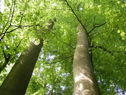 Forêt de Mormal 14.JPG