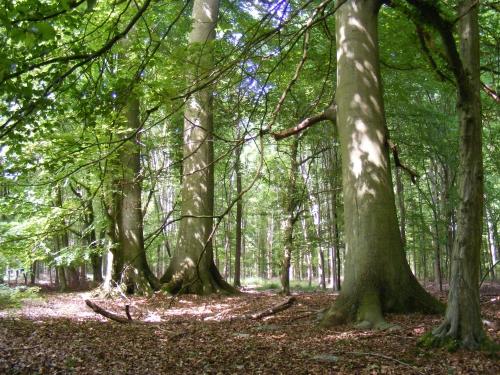 Forêt de Mormal 6.JPG