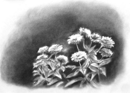 Fleurs du jardin 03/09/2012