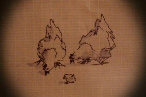 Poules et poussin 15/05/2013