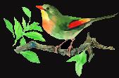 oiseaublogstan.png