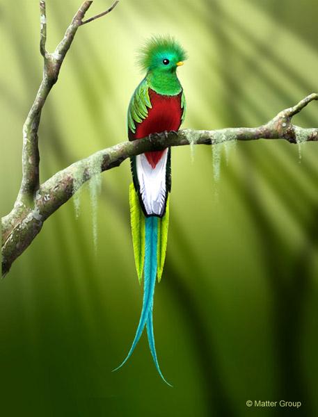 quetzal resplendissant.jpg