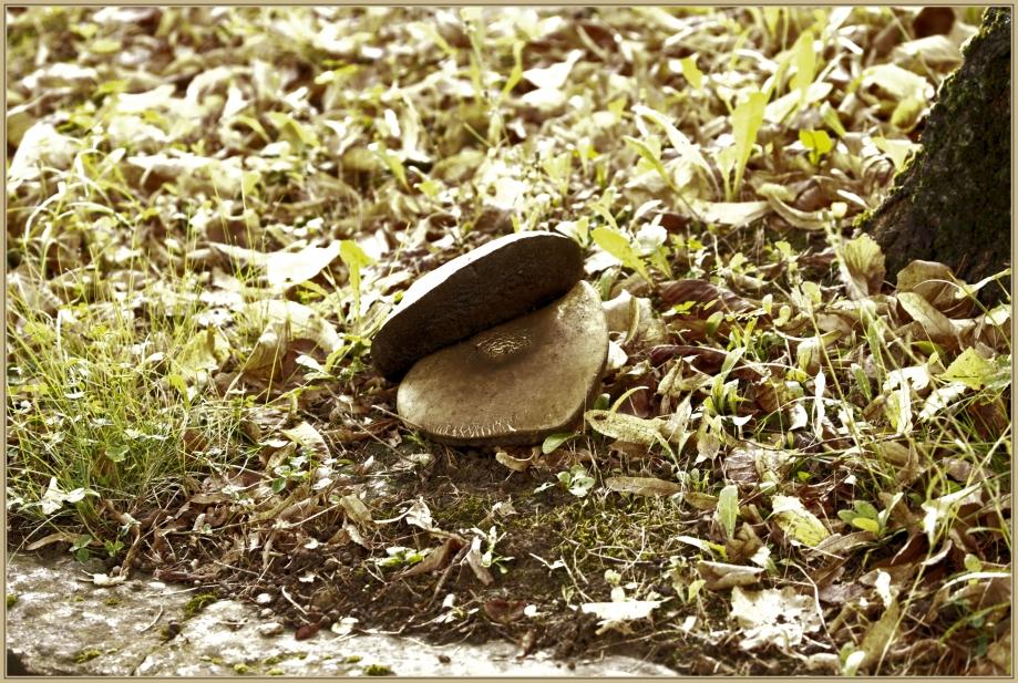 UE8A6906 gros champignon.jpg