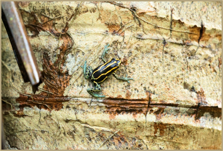 UE8A4656 grenouille colorée.jpg