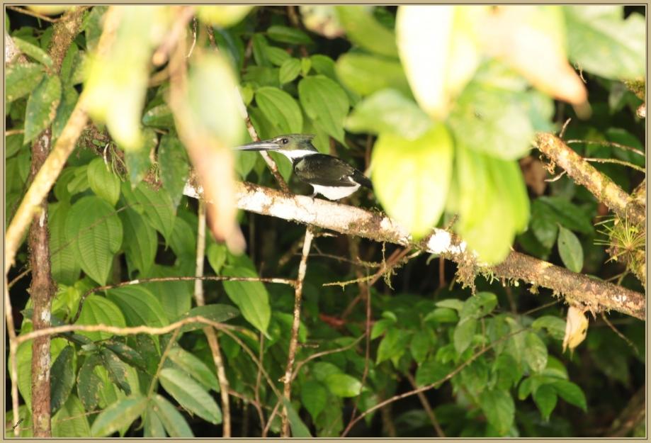 UE8A8531 Martin peceur vert.jpg