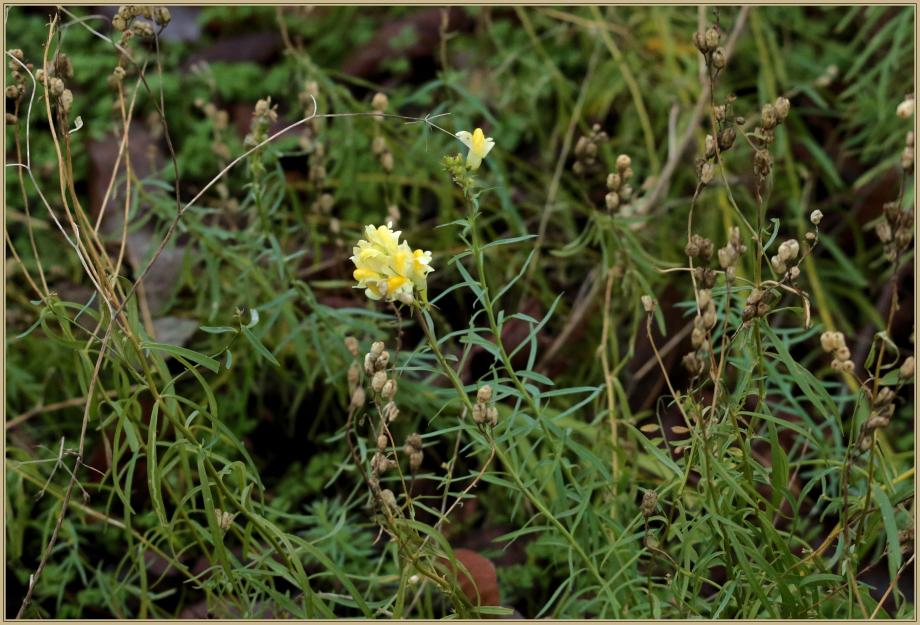 UE8A8607 fleur jaune.jpg