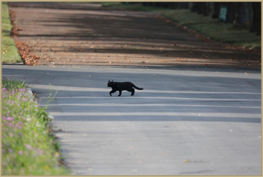 UE8A0169 chat noir.jpg