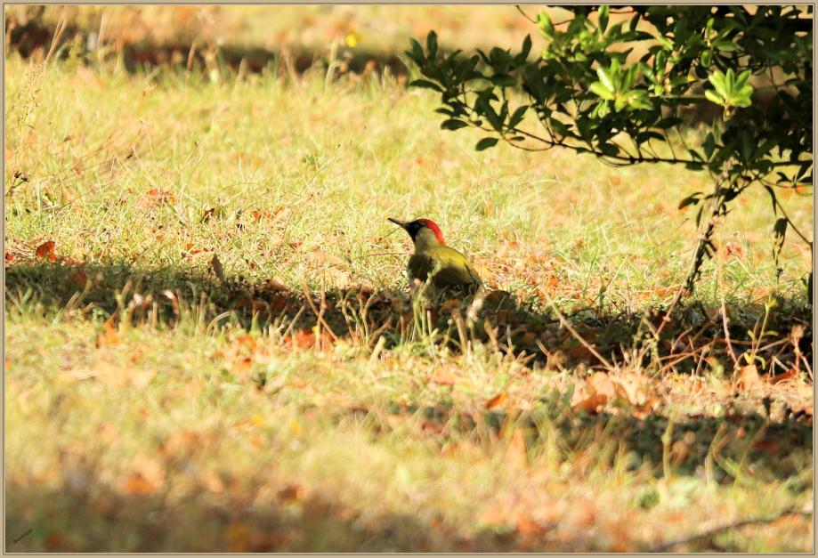 UE8A2864 Pic vert F -.jpg