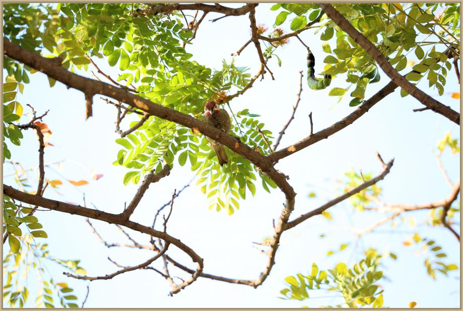 UE8A3328 Pic or-olive.jpg