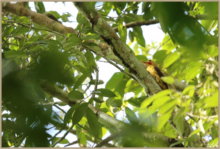 UE8A5117 Pic jaune - OK.jpg