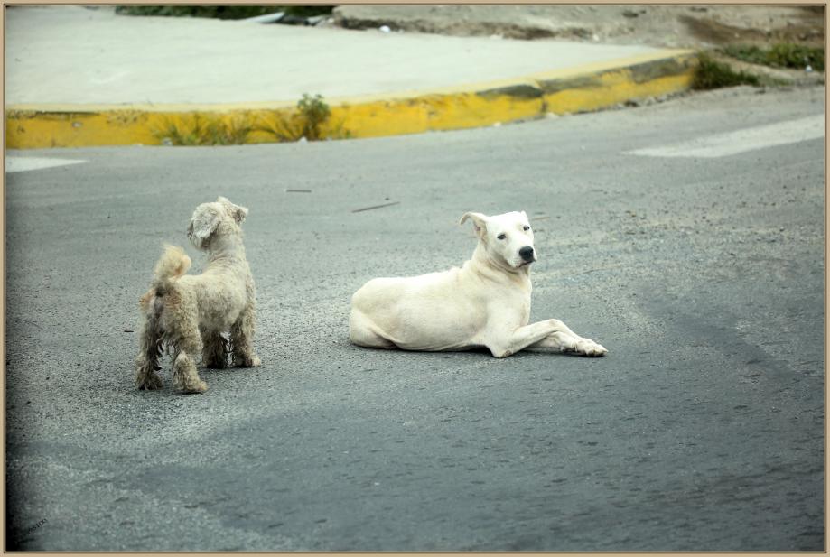 UE8A4645 chien.jpg