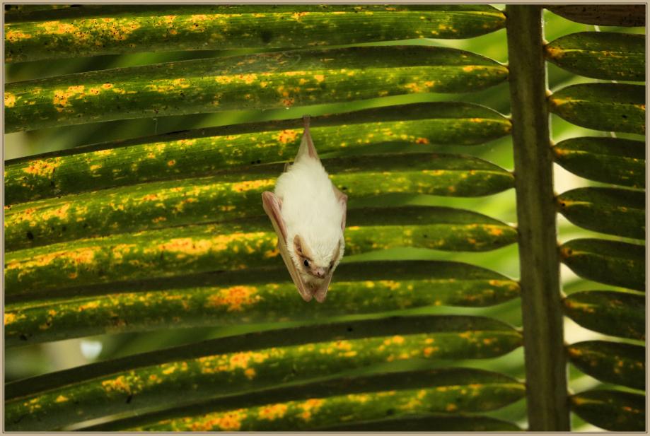 UE8A6187 chauve souris.jpg
