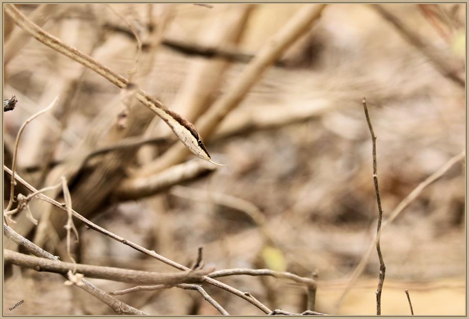 UE8A6320 serpent.jpg