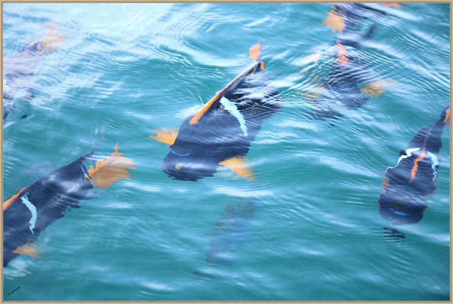 UE8A6841 poisson.jpg