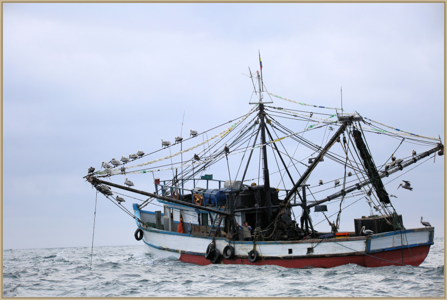 UE8A6852 bateau.jpg