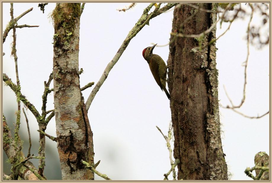 UE8A9367 Pic or-olive.jpg