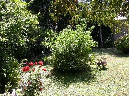 un petit coin de jardin