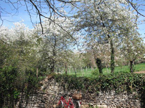 Neige d'arbres aux jardins mothais