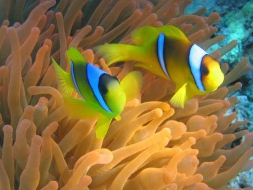 Sympathique Nemo !
