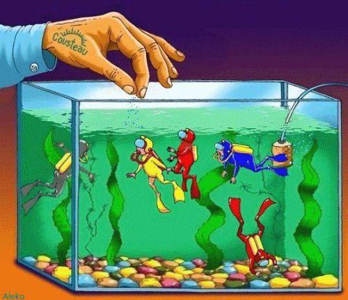 Le commandant Cousteau nourrit ses petits protégés !