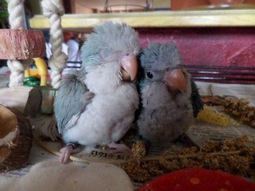 ZAYA ET BIRDY : grosse siete et gros calin !