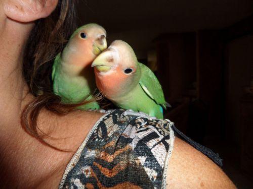 blou et kiss vendue à amanda : moment bisoux !