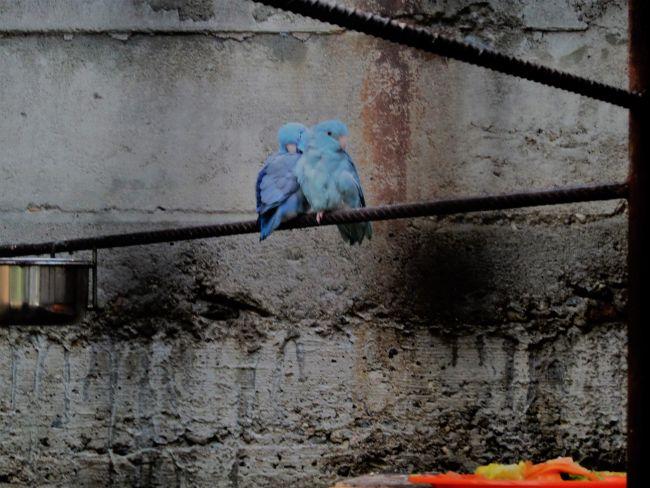 notre beau couple toui celeste bleue cobalt / KIMI ET KALI