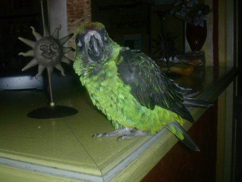 WILLO ,mon perroquet de jardine