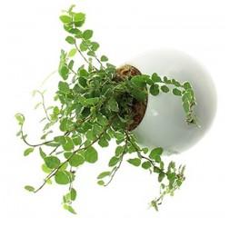 Flowerbox miniaturesdeparfumblog4evercom.png
