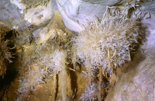 06 - Le chrysanthème.jpg