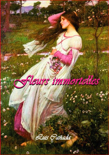 863 Fleurs immortelles.JPG
