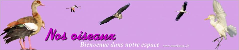 nos oiseaux