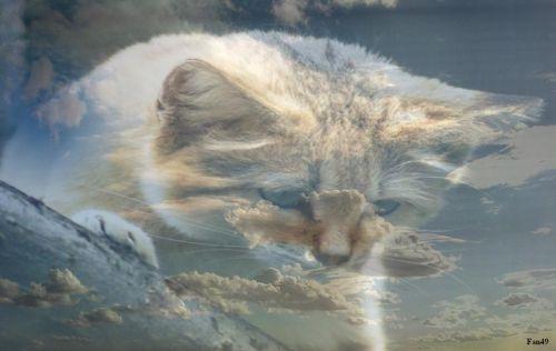 Fondu chat des sables