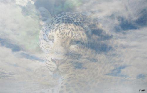 Fondu panthere nuage