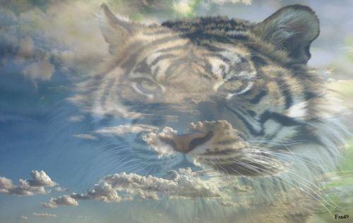 tigre en nuage