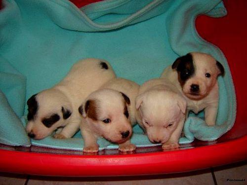 Gavroche avec ses frères et soeurs  à 3 semaines