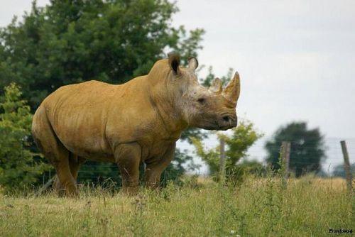 Rhino 2011