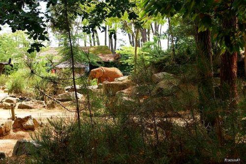 Elephant zoo de la Fleche 2010