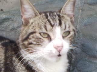 Minou, un de mes chats