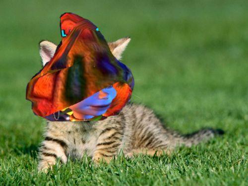 Montage de Lilas en chat ! lol