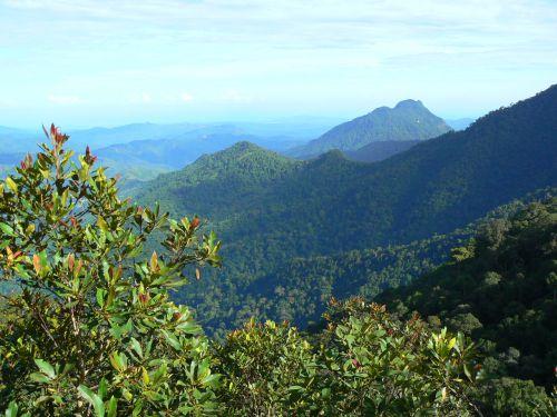 Hauteur du Parc Kinabalu