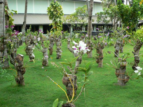 Jardin d'orchidées
