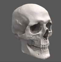 crâne.png