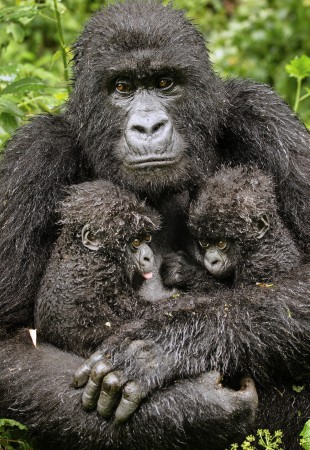 Twin-hope-by-Diana-Rebman_Commended-WPY-2013-310x450.jpg