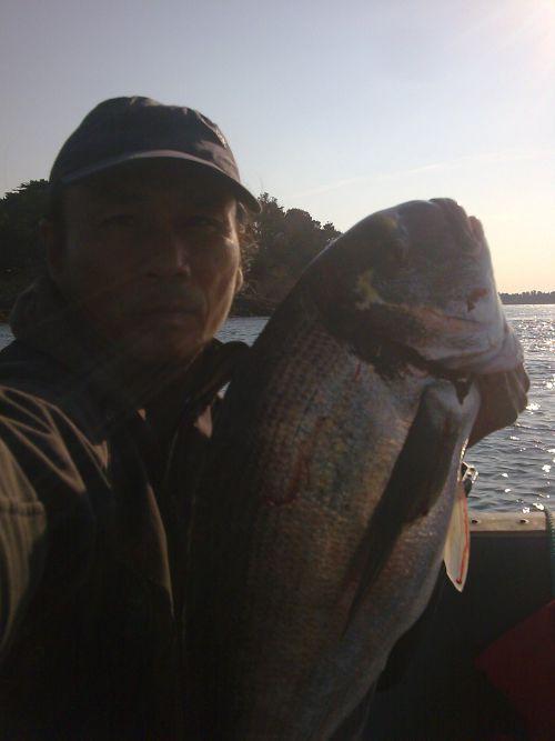 Dorade Royale de 4 kg prise au petit matin (Golfe du Morbihan)